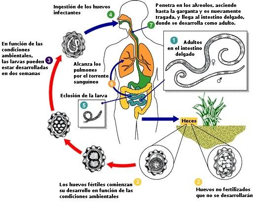 Proyecto Ambiental: Junio 2012