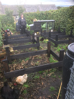 Chickens, Life on Pig Row