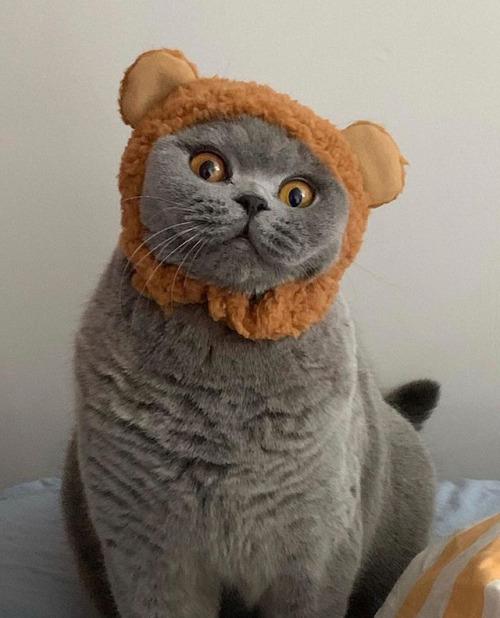 kitten pictures