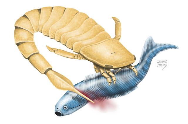 Sea scorpions: The original sea monster