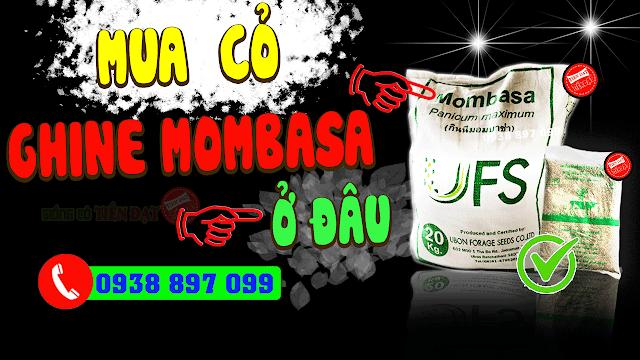 Mua cỏ ghine mombasa thái lan ở đâu uy tín