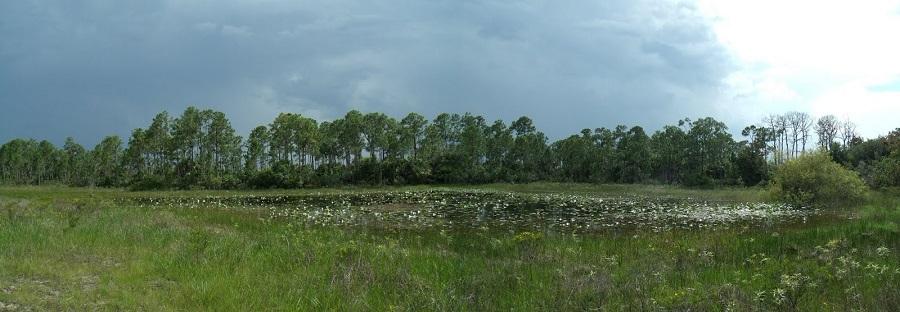 Lagunas entre los Everglades con los bosques de fondo