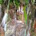 हिमाचल में पहाड़ी से बह रहा दूध जैसा तरल पदार्थ: उमड़ पड़ी भक्तों की आस्था, शुरू हुई पूजा-अर्चना