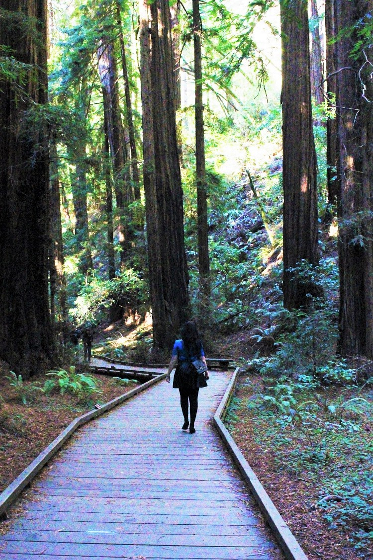 Walking through Muir Woods - California travel blog