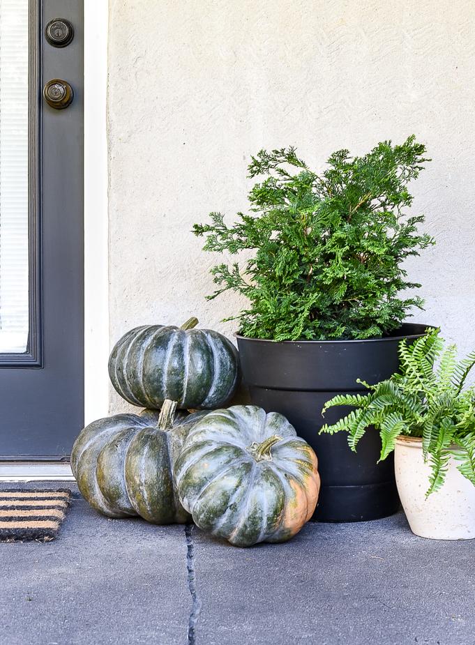 Green cinderella pumpkins on porch
