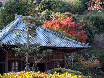 Autumn leaves: Kaizo-ji
