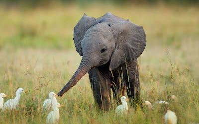 Resultado de imagem para elefantinhos