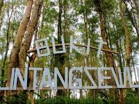 Bukit Lintang Sewu, Destinasi Wisata Baru dengan Hutan Kayu Putih Yang Menawan
