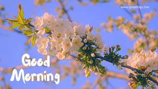 good morning images daily flower greetings