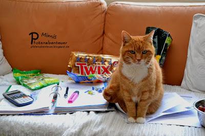 Katze Mimi hilft moralisch beim Lernen für die Abschlussprüfung