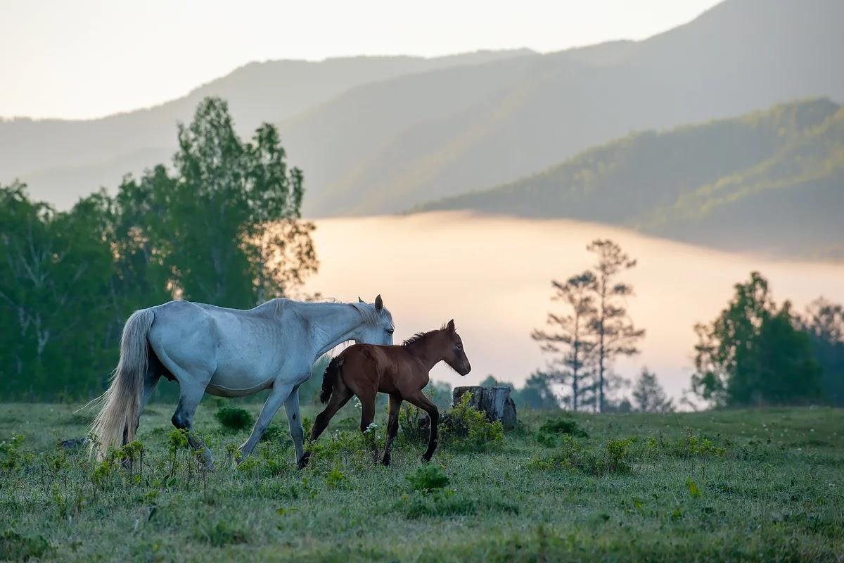 احصنة جميلة