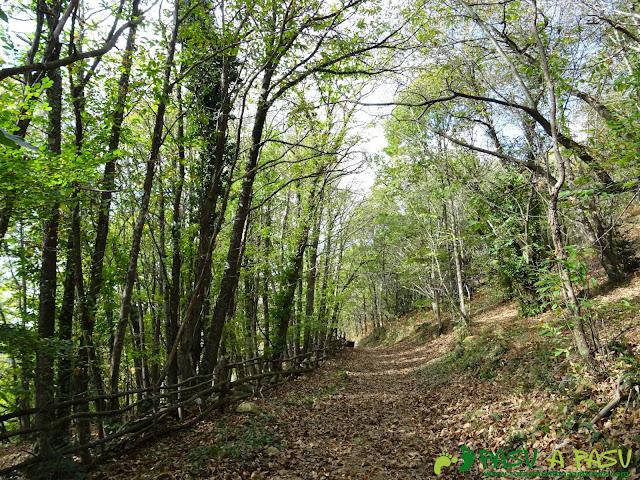 Bosque sobre Campiellos