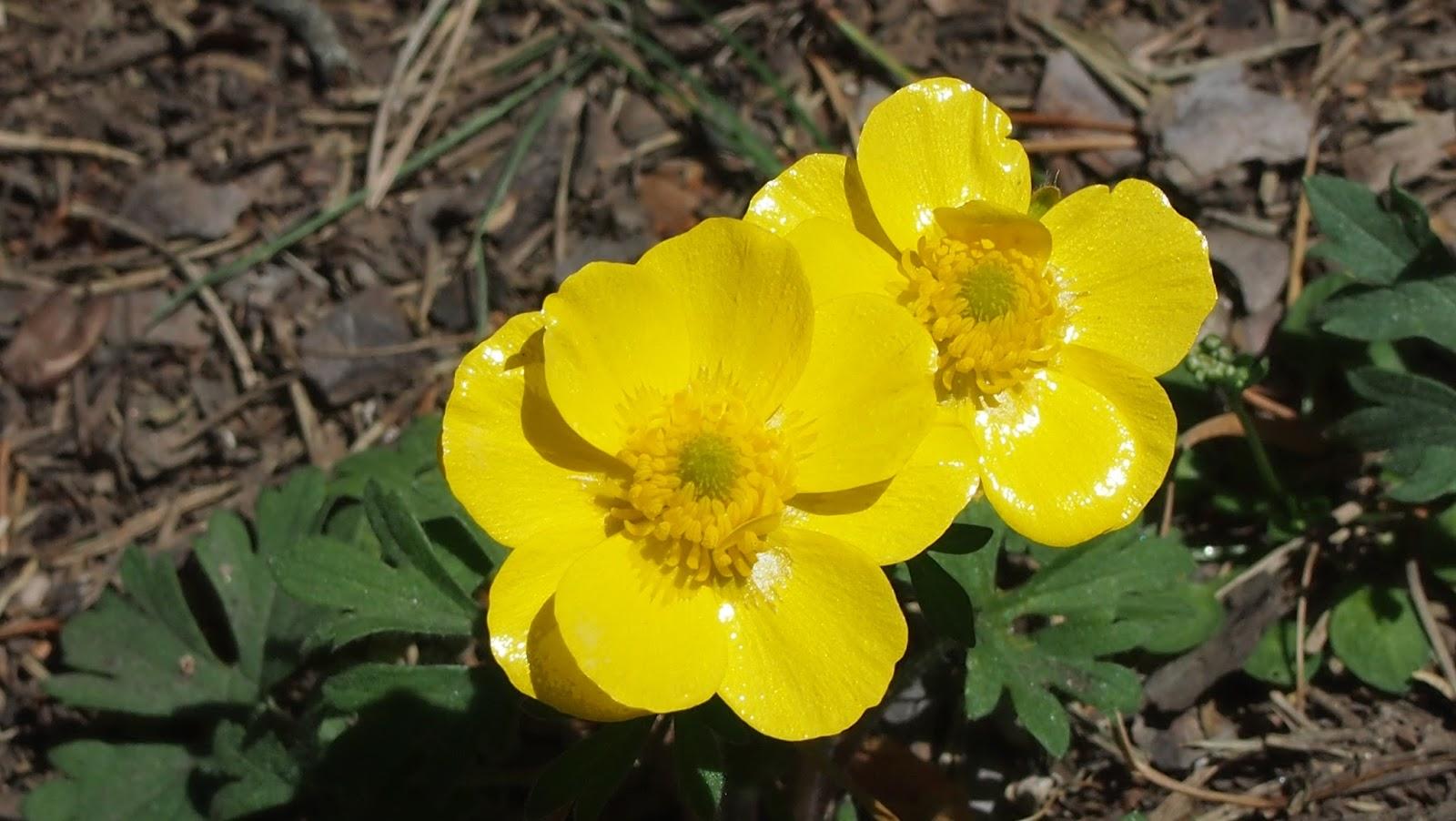 Flores de Cercedilla