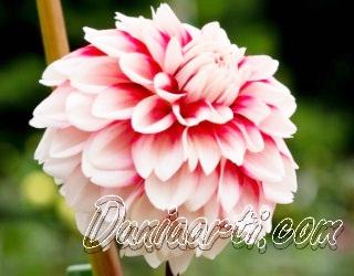 Arti Mimpi Yang Berkaitan Dengan Bunga Menurut Ahli