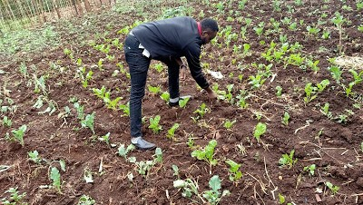 Can we make farming appealing to youth? Why is it that despite the huge untapped potential in agriculture, the youth still avoid it ?