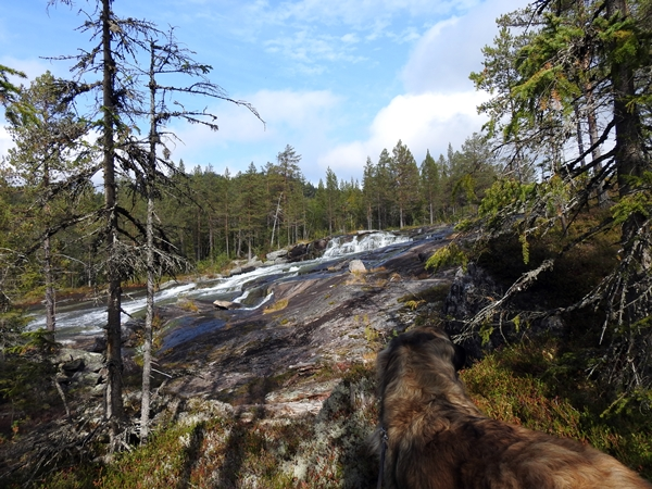 vassfarstien leonberger høgfoss