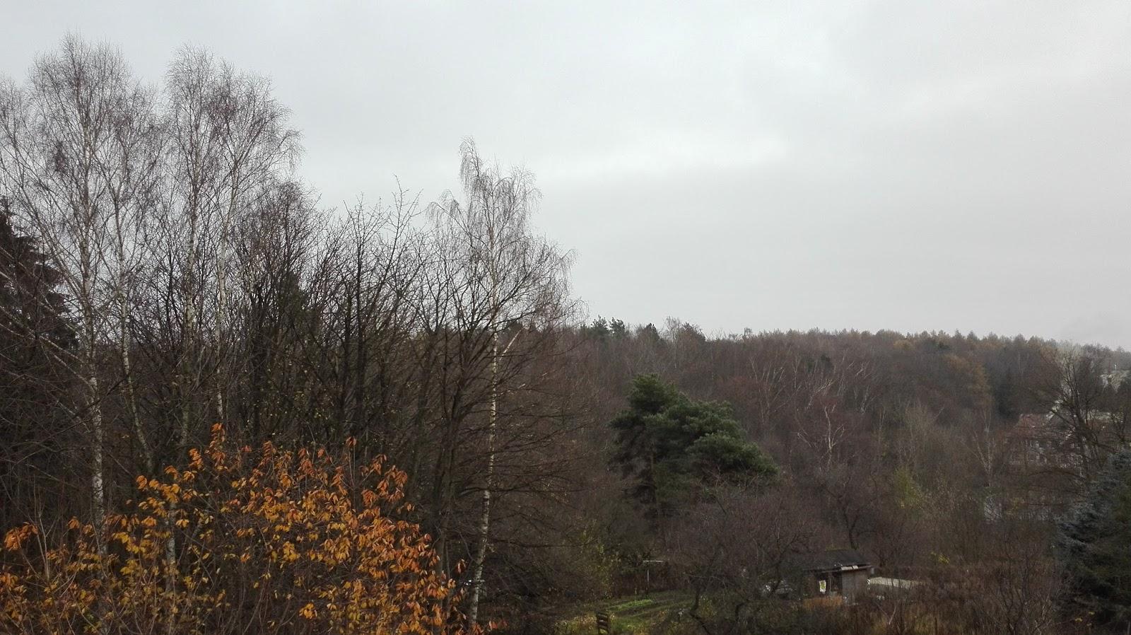 Listopadowy las