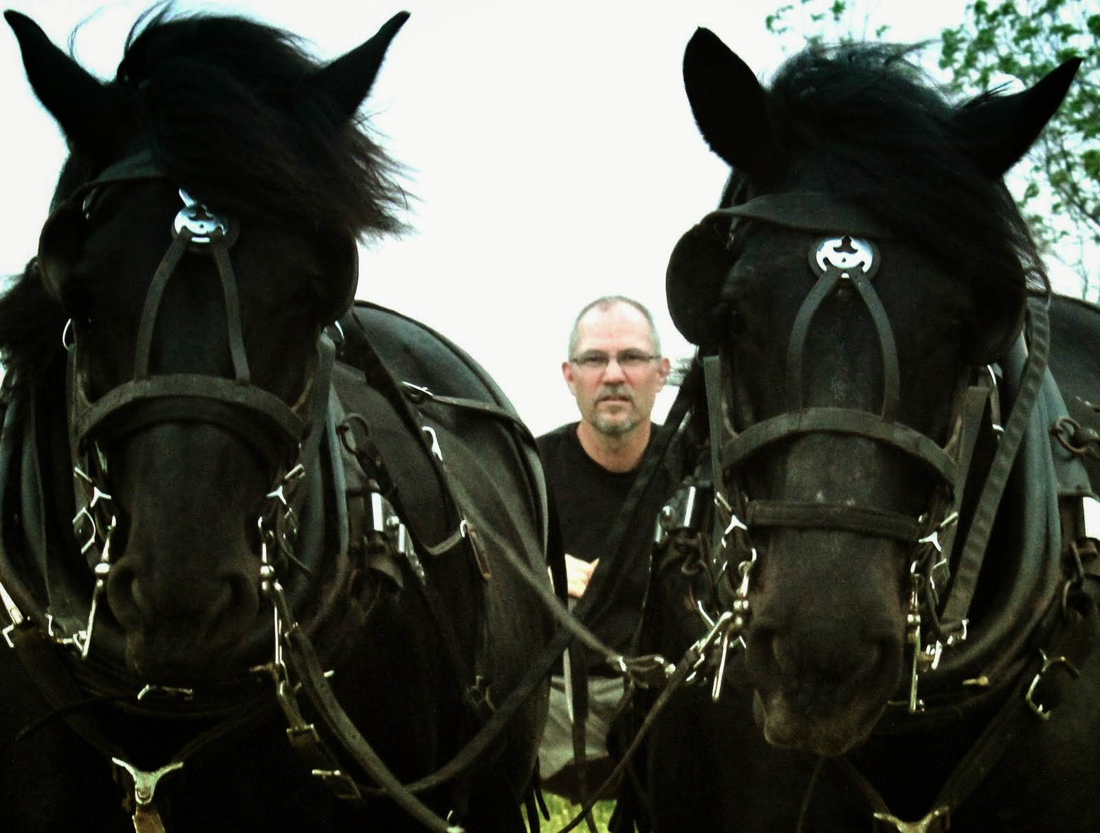 Amish Horses Horse Progress