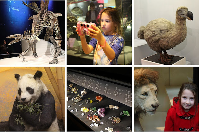 The Butterfly Balcony: Wendy's Week - A Stegosaur & A Self Draft Skirt Natural History Museum