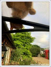 Friday Fluffers with The B Team @BionicBasil® Fudge's Funny View On The Wurld