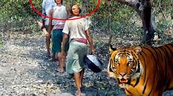 Tại sao Hổ sợ khi tấn công một người đối mặt trực diện với nó mặc dù một người yếu hơn nó rất nhiều?