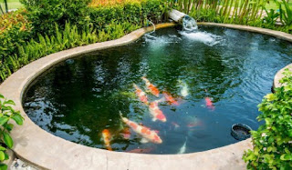 9 Arti Mimpi Melihat Ikan Di Kolam Menurut Primbon Jawa Terlengkap