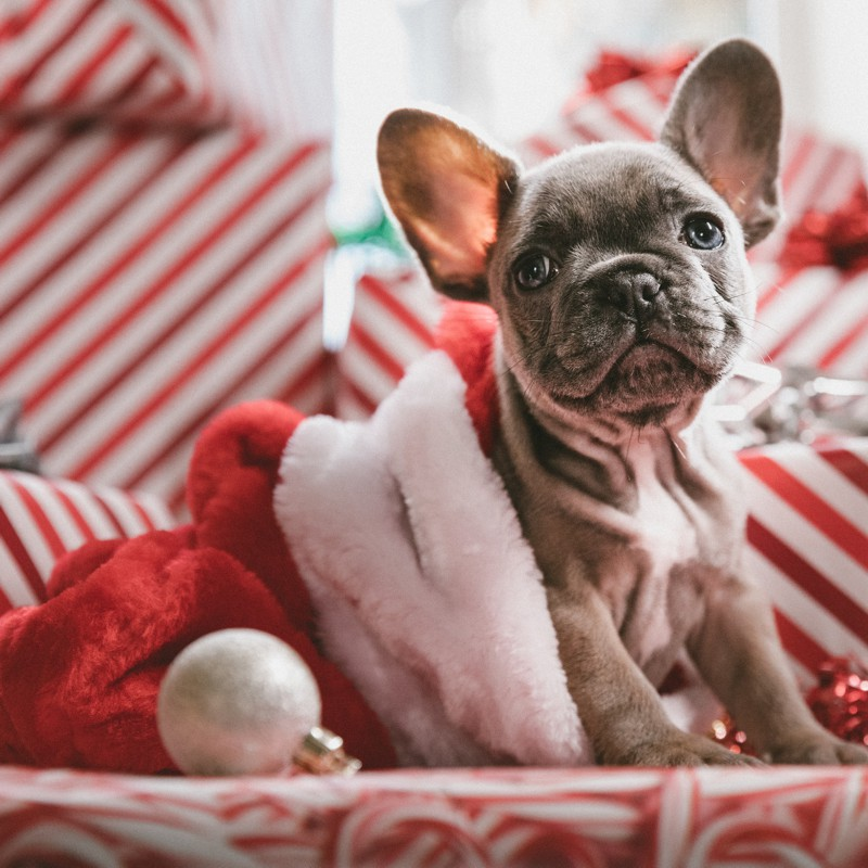 Festa de natal na casa de parentes ou amigos - comportamento
