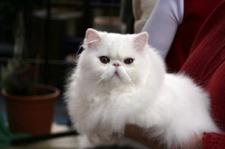 Cara Merawat Kucing www.simplenews.me