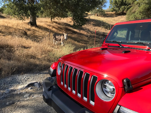 Hood and grille of 2019 Jeep Wrangler Unlimited Sahara 4X4