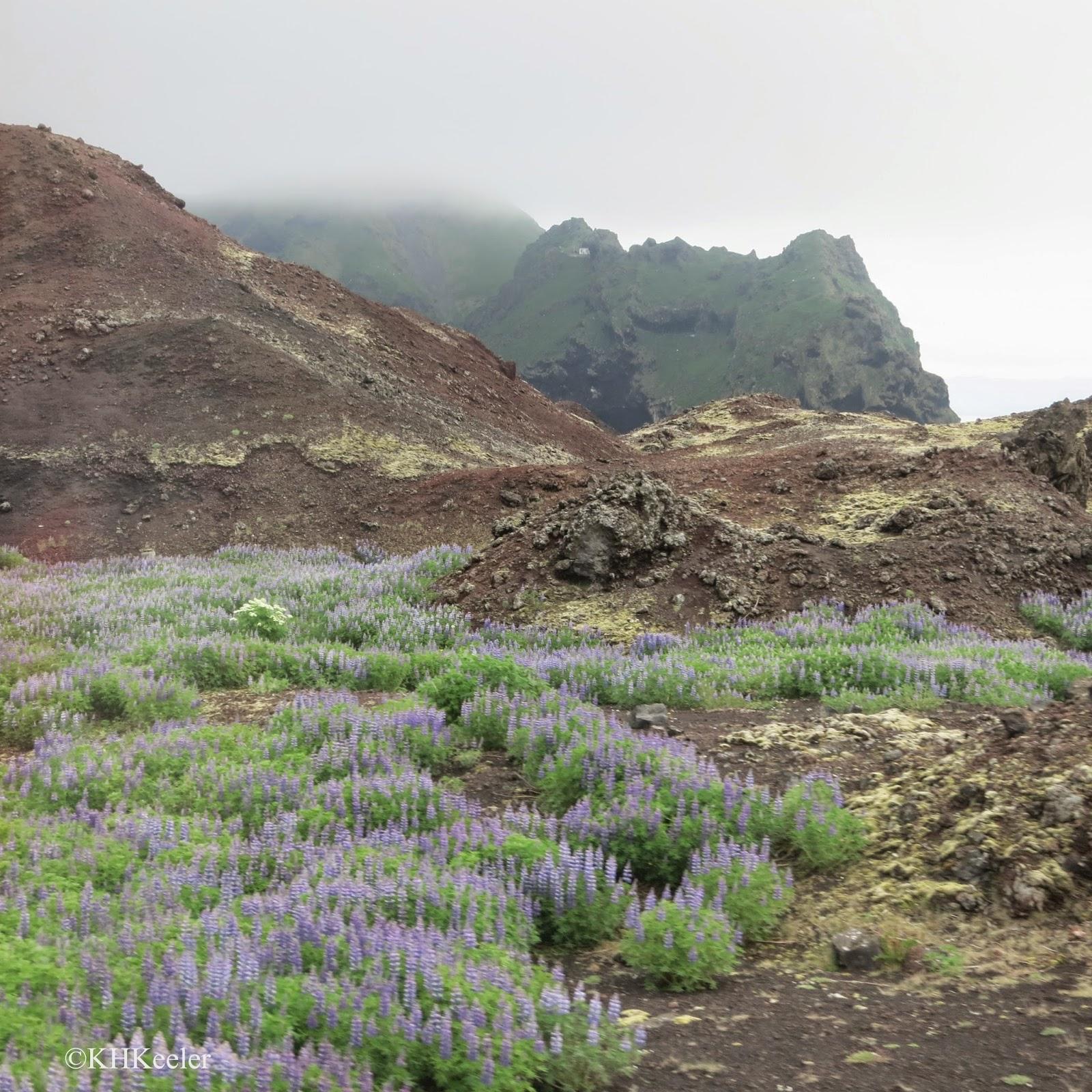 Lava Flow from 19xx Eruption, Westman Islands