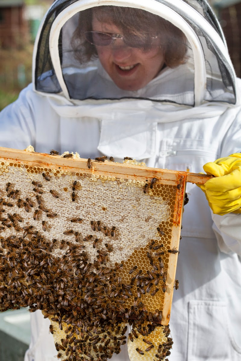 bees suit, bee keeping, bee hives