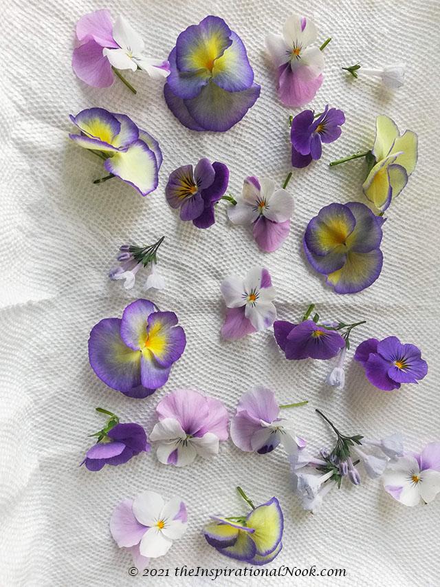 Pansies, Violas, Purple, yellow, white,  Virginia blue bells.