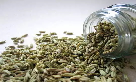 Essential Benefits of Drinking Fennel milk. 200% People Don't know about it