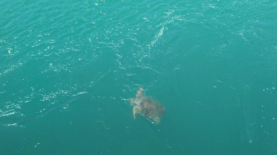 Δες τι τρομακτικό και συνάμα γλυκούλη κολυμπούσε στη θάλασσα στη Χαλκίδα