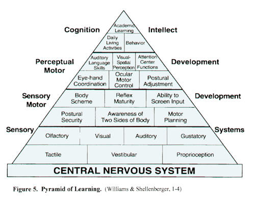 Williams & Shellenberger Pyramid of Learning