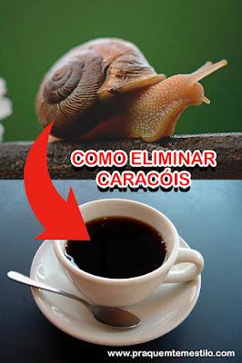 Como eliminar caracóis
