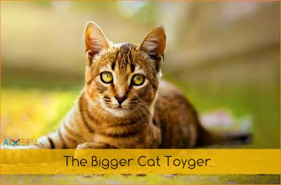 Best Cat breeds in world,