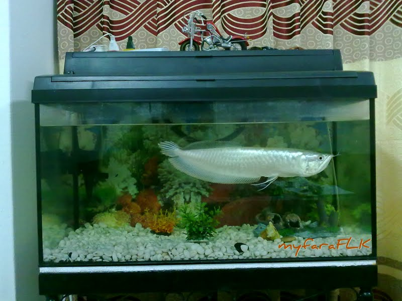 Gambar Ikan Katak