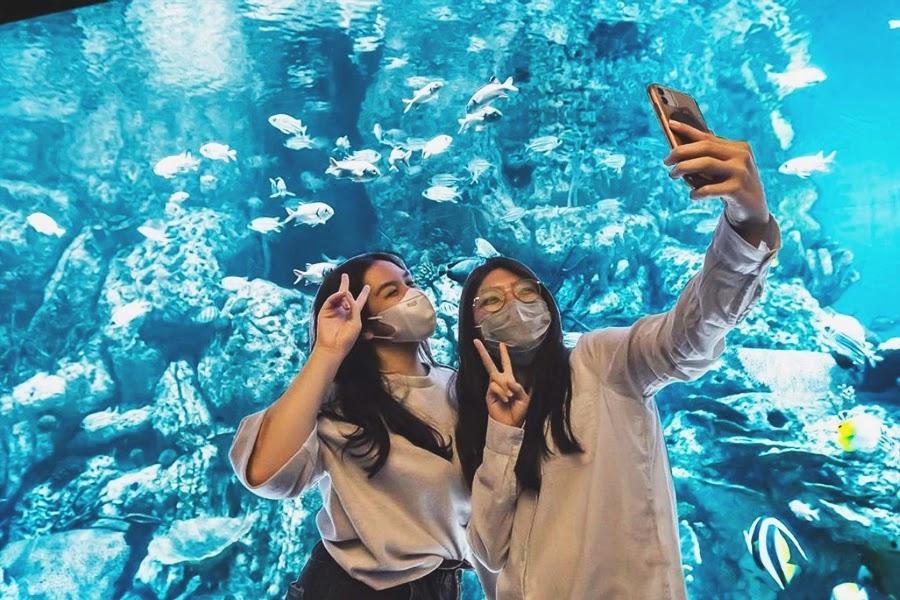 Lokasi dan Rute Jakarta Aquarium