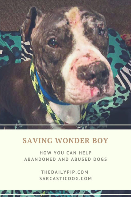 How you can help abandoned and abused dogs like Wonder Boy