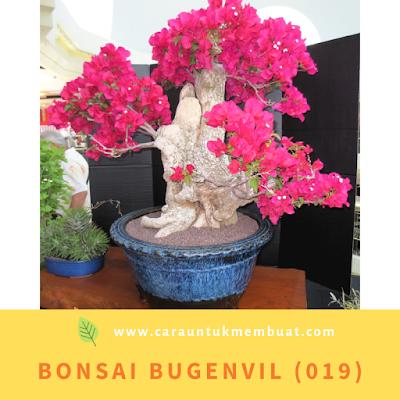 Bonsai Bugenvil (019)