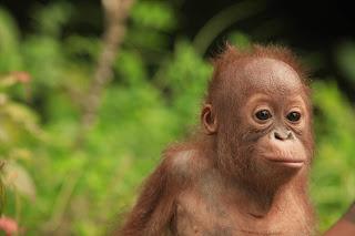 Borneo, Sulawesie, Papouasie, Komodo, 23 jours 22 Nuits