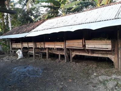 Cara Mengatasi Bau Kotoran pada Kandang Ternak Kambing, Sapi dan Unggas