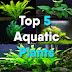 Top 5 True Aquatic Plants in Aquarium