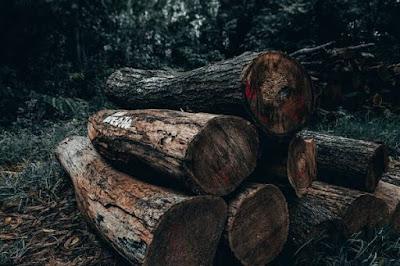 Hutan Produksi, Contoh Hutan Produksi