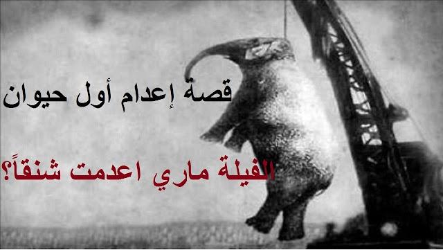 ما هي قصة إعدام أول حيوان - الفيلة ماري اعدمت شنقاً ؟