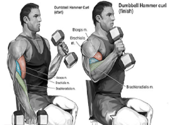 4 ways to do biceps concentration curls