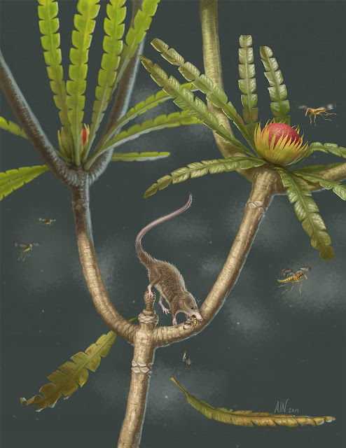 Jurassic fossil shows how early mammals could swallow like their modern descendants