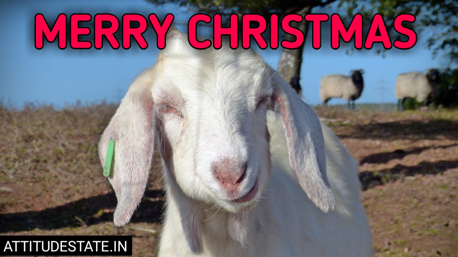 funny merry christmas moving images