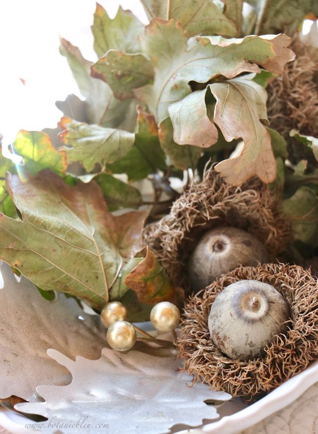 Thanksgiving Natural Centerpiece using Bur Oak twigs with fringed acorns attached